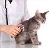 Ветеринарные клиники в Перелюбе
